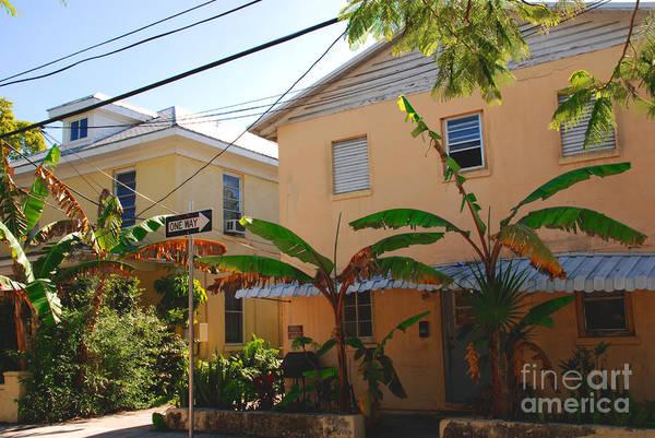 Photograph - Banana Tree Lane In Key West by Susanne Van Hulst