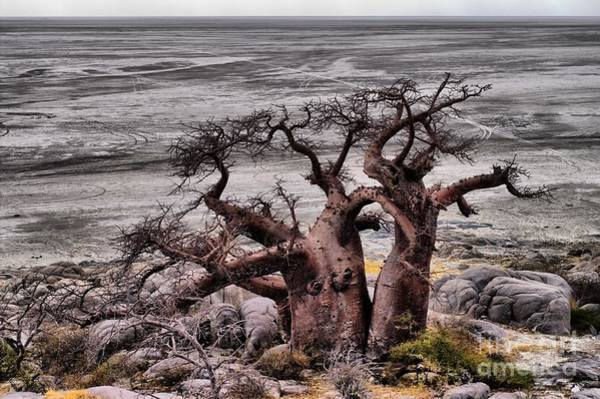 Photograph - Baobab In The Desert by Mareko Marciniak