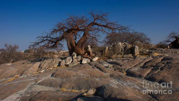 Photograph - Baobab On The Rocks by Mareko Marciniak