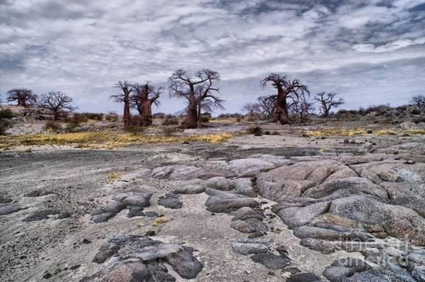 Photograph - Baobabs On The Roks by Mareko Marciniak
