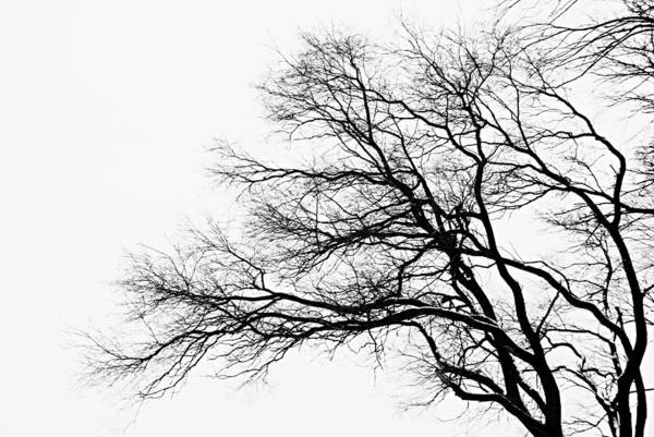 Photograph - Bare Tree Silhouette by Larry Ricker