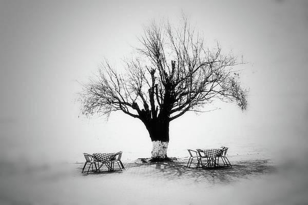 Photograph - Bare Tree by YongJun Qin
