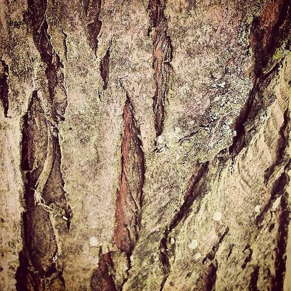 Macro Photograph - Bark by Nic Squirrell