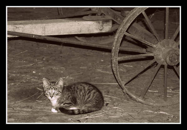 Photograph - Barn Cat II by Lora Mercado