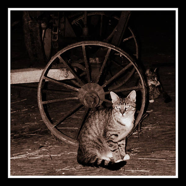 Photograph - Barn Cat by Lora Mercado
