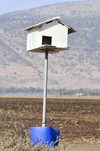 Kibbutz Photograph - Barn Owl Coop by Photostock-israel