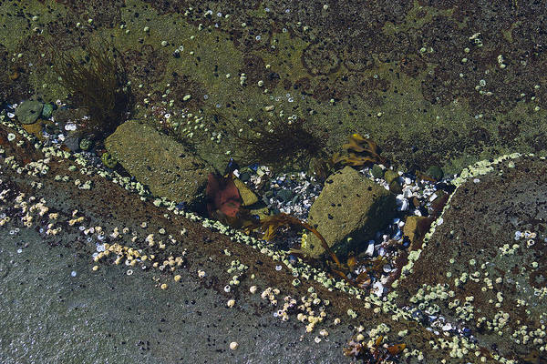 Photograph - Barnacles And Rocks by David Kleinsasser