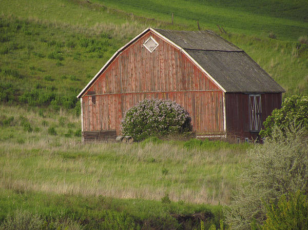 Barns Of The Palouse 6 Art Print by Tony and Kristi Middleton