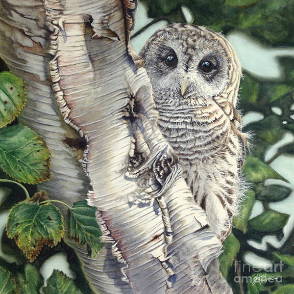 Painting - Barred Owl II by Greg and Linda Halom