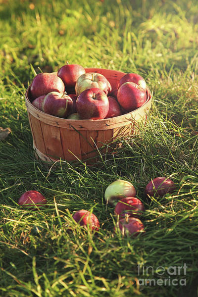 Wall Art - Photograph - Basket Of Apples In The Orchard by Sandra Cunningham