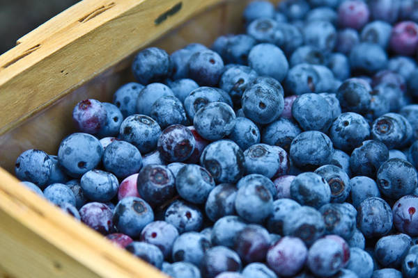 Wall Art - Photograph - Basket Of Berries by Joshua Ball