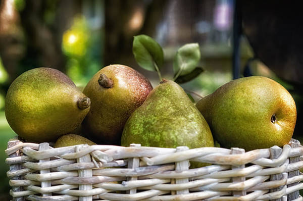 Unframed Wall Art - Photograph - Basket Of Pears by Lori Coleman