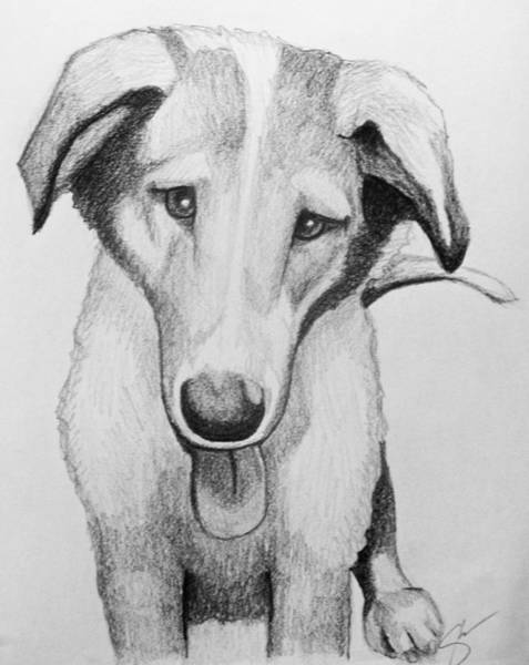 Coolidge Drawing - Baxter by Sara Coolidge