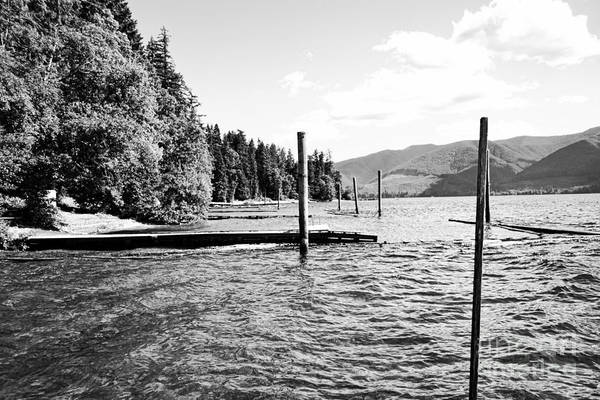 Photograph - Bc Life by Traci Cottingham