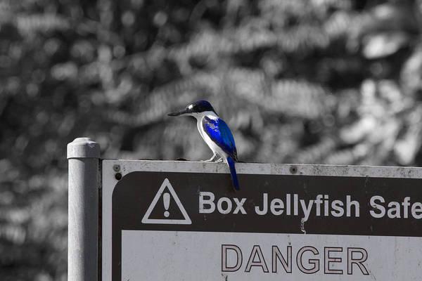 Notice Board Photograph - Be Warned by Douglas Barnard