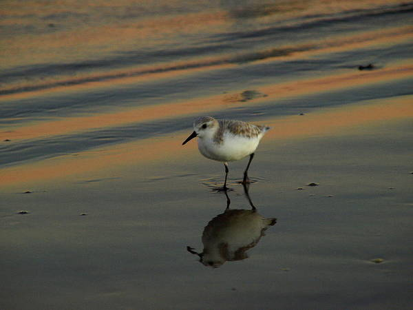 Photograph - Beach Bird I by James Granberry
