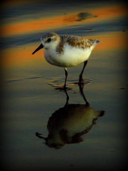 Photograph - Beach Bird II by James Granberry