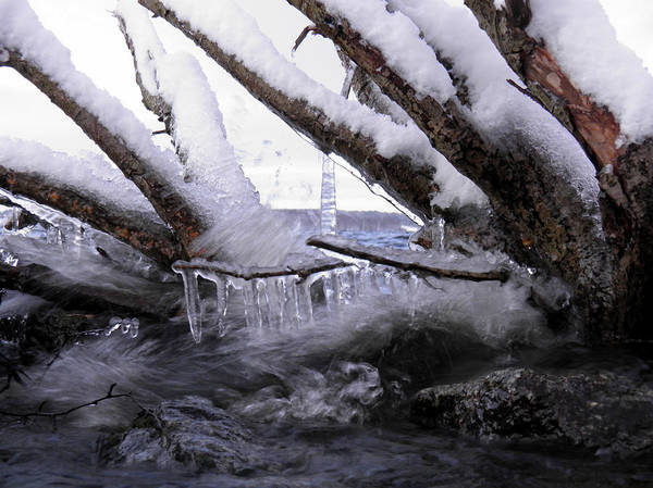Photograph - Beach Branches by Sami Tiainen