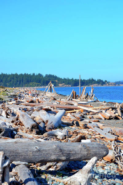 Photograph - Beach Of Logs by Traci Cottingham