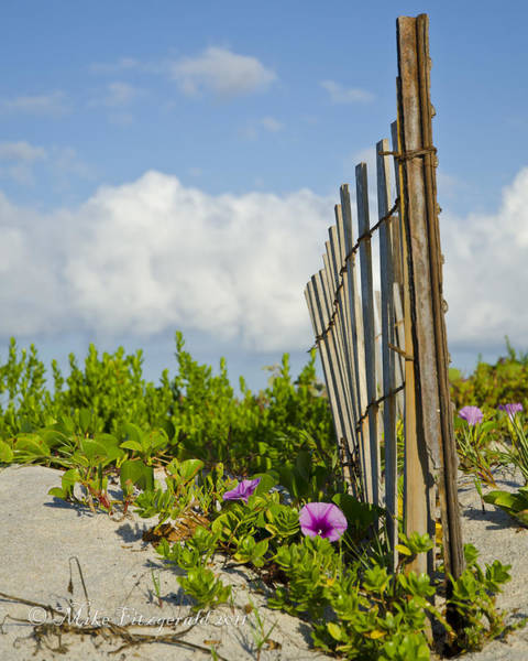 Photograph - Beach Simplicity by Mike Fitzgerald