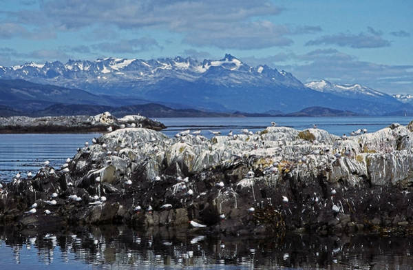 Photograph - Beagle Channel - Tierra Del Fuego by Juergen Weiss