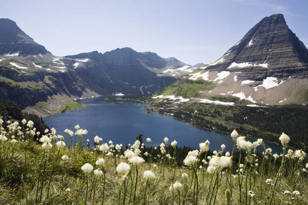 Photograph - Bear Grass Near Hidden Lake And Bearhat by Sebastian Kennerknecht
