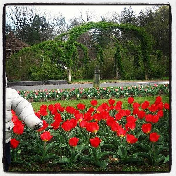 Wall Art - Photograph - Beautiful Garden In Elizabeth Park by Yiddy W
