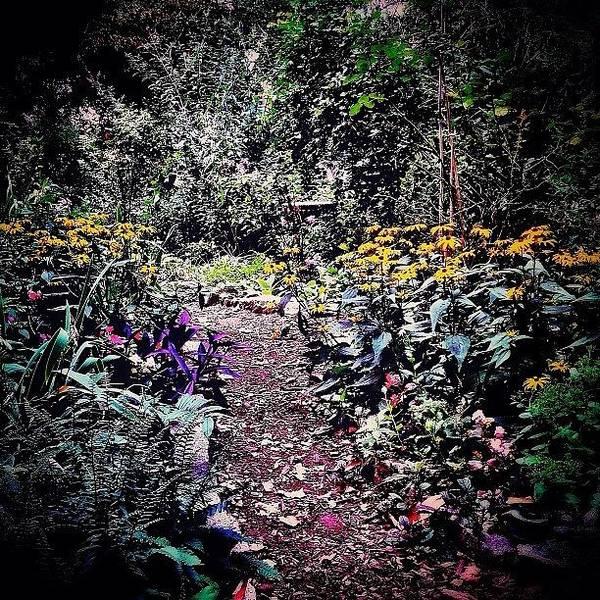 Wall Art - Photograph - Beautiful Garden Path - New York City by Vivienne Gucwa