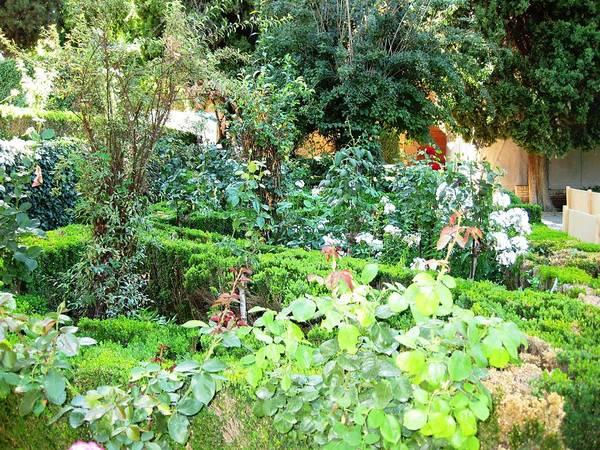 Photograph - Beautiful Green Spanish Garden Granada Spain by John Shiron