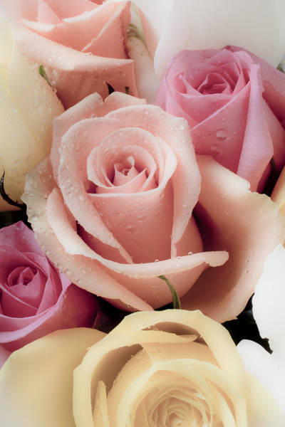 Fragrance Photograph - Beautiful Roses by Garry Gay