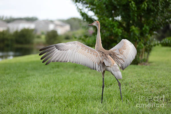 Wing Back Photograph - Come Back To Me by Carol Groenen