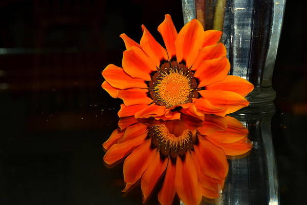 Photograph - Beauty In Reflection by Rima Biswas