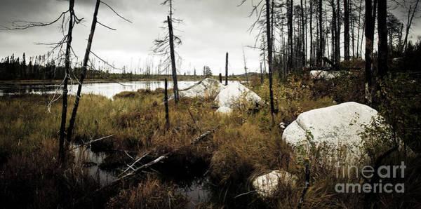 Photograph - Beaver Pond by RicharD Murphy