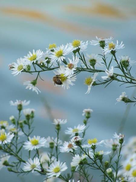 Photograph - Bee 2 by Anita Burgermeister