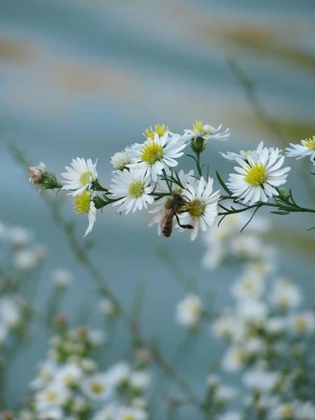 Photograph - Bee 3 by Anita Burgermeister