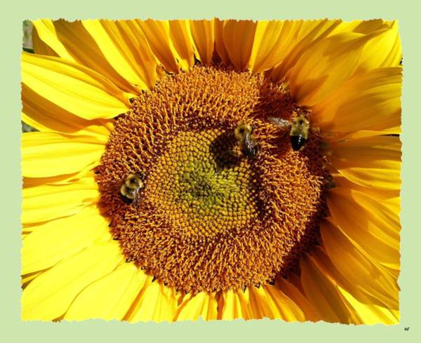 Wall Art - Photograph - Bee-ing Up Close by Will Borden