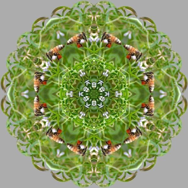 Katrina Digital Art - BEE by Katrina Johns