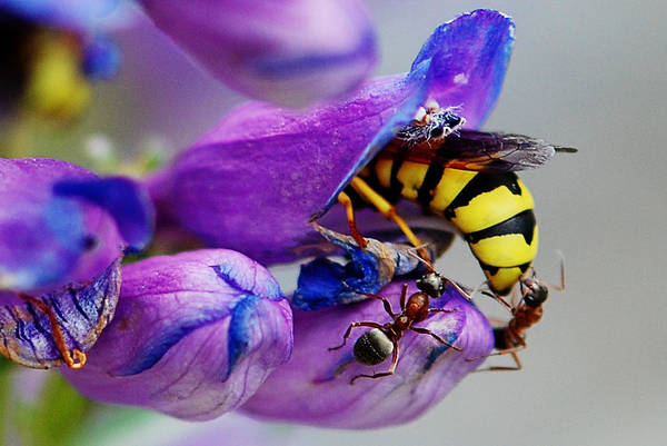Photograph - Bee Parking Lot by Melany Sarafis