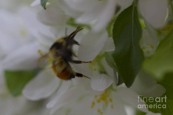 Photograph - Bee Settling In by Donna L Munro