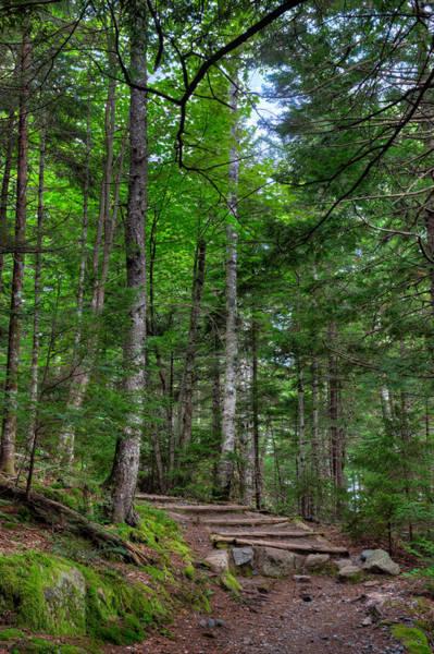 Acadia National Park Photograph - Beech Mountain Trail Acadia by Steve Gadomski