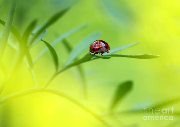 Ladybird Wall Art - Photograph - Beetle Butt by Sharon Talson
