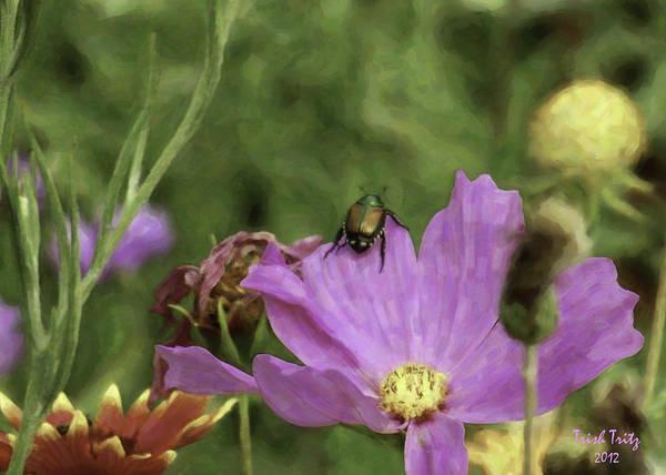 Photograph - Beetlejuice by Trish Tritz