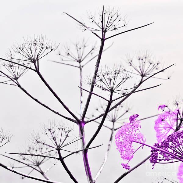 Photograph - Sicilian Sound Of Spring by Silva Wischeropp
