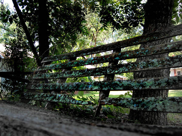 Cantrell Wall Art - Photograph - Benched by Tammy Cantrell