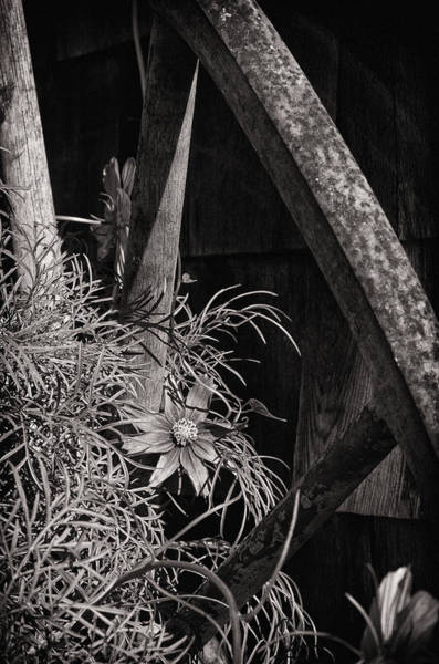 Wall Art - Photograph - Beneath The Wheel by Susan Capuano