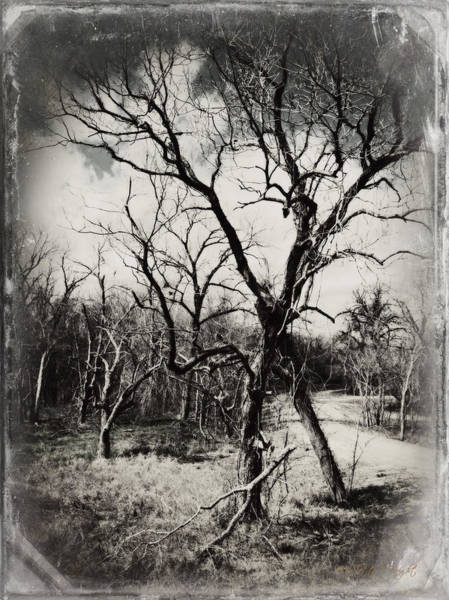 Photograph - Bent And Crooked Bw by Paulette B Wright