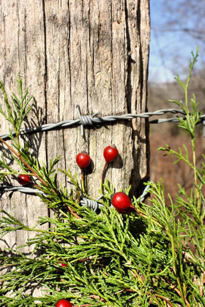 Photograph - Berries And Barbs by Kristin Elmquist