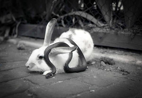 Photograph - Best Friends by Emanuel Tanjala