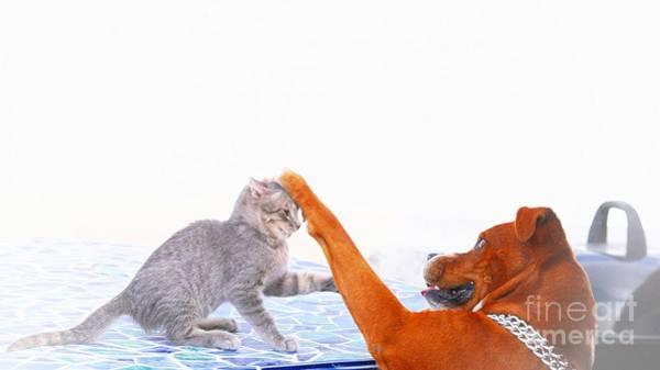 Photograph - Best Friends For Life by John  Kolenberg