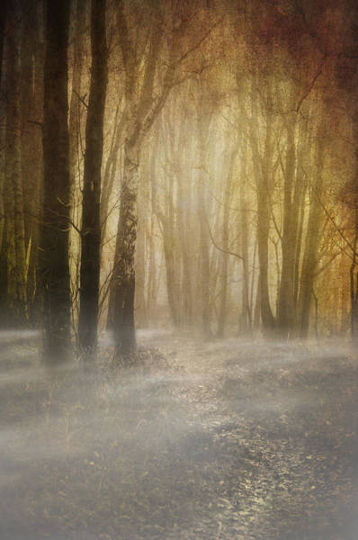 Photograph - Beware Misty Woodland Path by Meirion Matthias